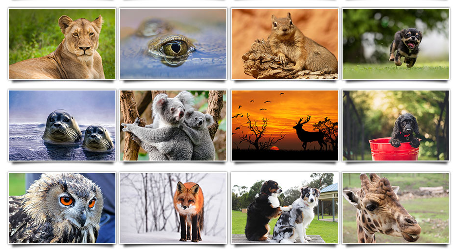 Animal Photos